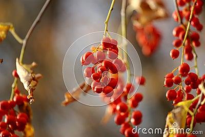 Berry Pretty