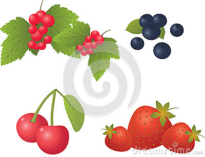 Berry set on a white background.