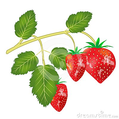 Berry strawberries