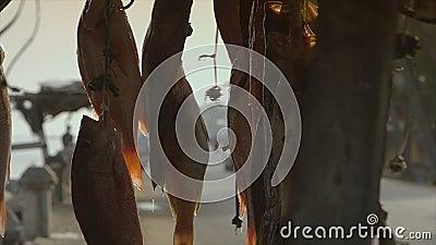 bespoten water - hang verse bongavissen, Conakry stock video
