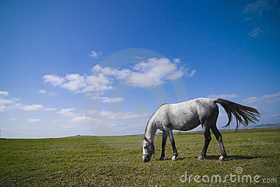 Betande häst