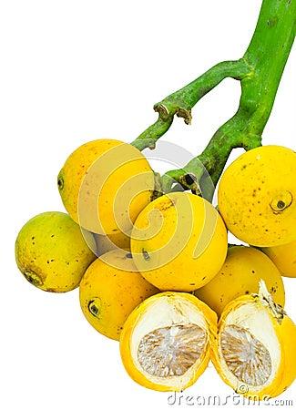Free Betel Nut Palm Fruits. Stock Photos - 21805383