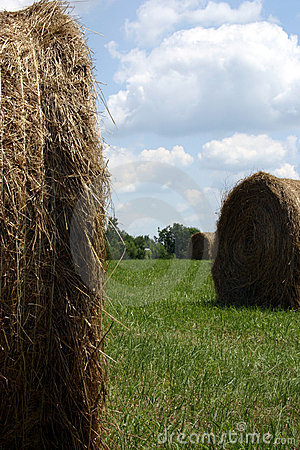 Free Between The Bales Royalty Free Stock Images - 13749