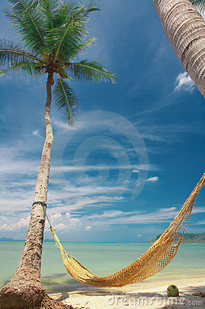 Free Between The Palms Royalty Free Stock Photo - 2296825