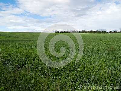 Beutiful green field background