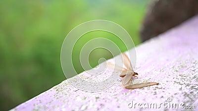 Bevingade termit lager videofilmer