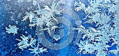 Bevroren ijsbloemen