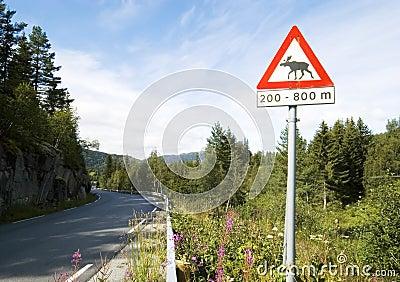Beware of moose