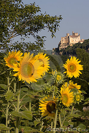 Free Beynac Castle And Sunflowers Stock Image - 13500191