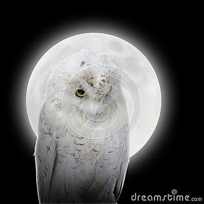 Búho blanco en noche con la luna