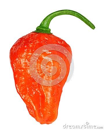 Bhut Jolokia chili pepper or the Naga Morich