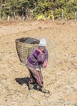 Bhutanese farmer on the field Editorial Stock Photo