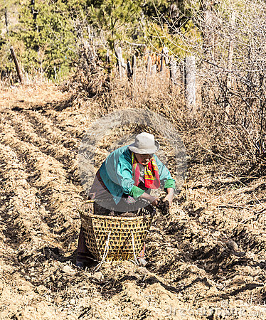 Bhutanese farmers on the field Editorial Photo