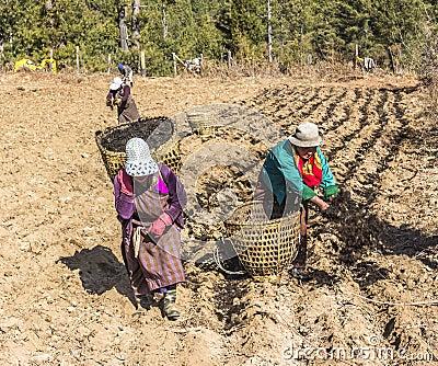 Bhutanese women on the field Editorial Stock Photo