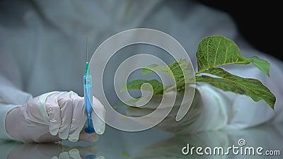 Biólogo que segura seringa e planta, impacto de pesticidas na flora, ensaio ecológico vídeos de arquivo