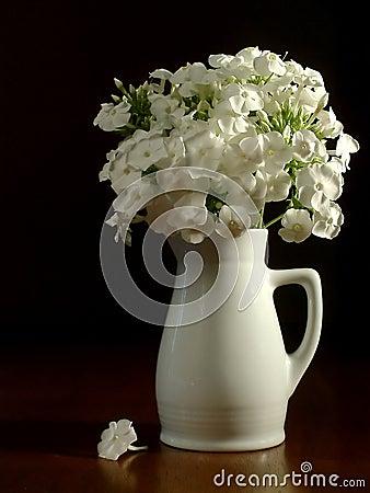 Białe kwiaty miotacza