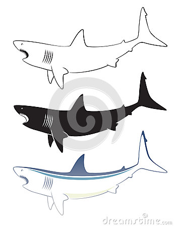 Biały rekin