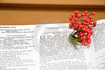 Bible and holly berries