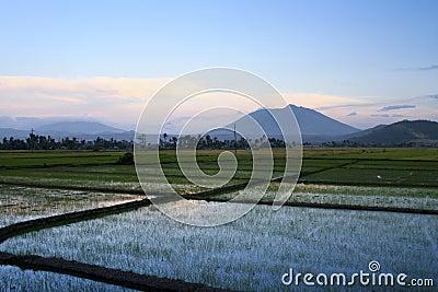 Bicol rice paddies sunset philippines