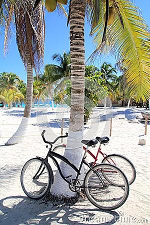 Bicycles bike on coconut palm tree caribbean beach