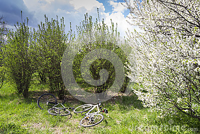 Bicycles in nature