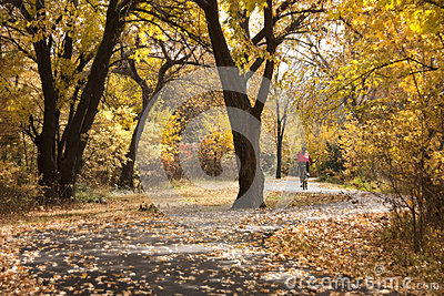 Bicyclist enjoys autumn ride along a winding path