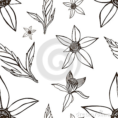 Bidens pattern Vector Illustration