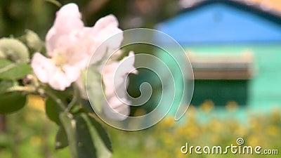 Bienenstock mit Bienen im Bienenhaus