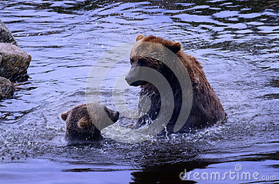 A big bear fighting small bear