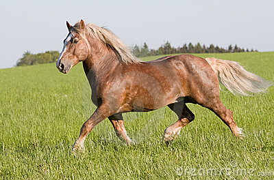 Big beautiful horse running