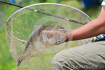 Big bream in net royalty free stock images image 32532939 for Big fishing net
