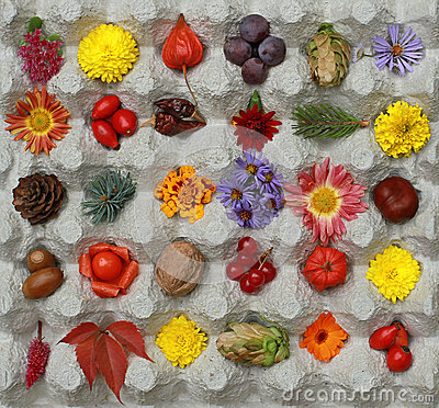 Free Big Bright Autumn Still Life In A Square Box. Walking Through Th Royalty Free Stock Photos - 61269588