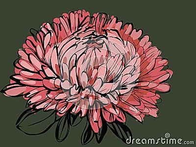 Big bud chrysanthemum