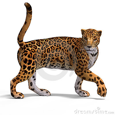 Big Cat Jaguar