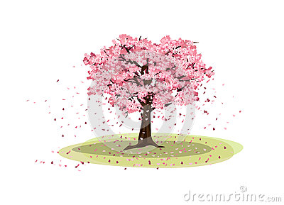 Big Cherry tree Stock Photo