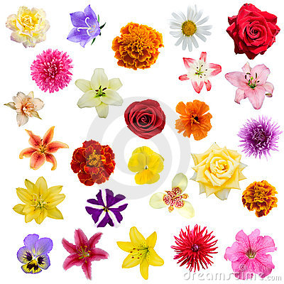 Free Big Collage From  Flowers Royalty Free Stock Images - 15466519