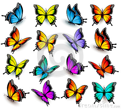 Free Big Collection Of Colorful Butterflies. Stock Photo - 70860980