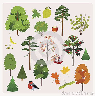 Free Big Collection Of Realistic Forest Trees, Frets, L Stock Photo - 29766870