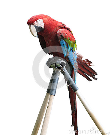Big Colorful Macaw Parrot Isolated
