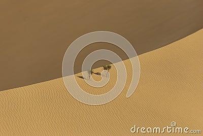 The big desert