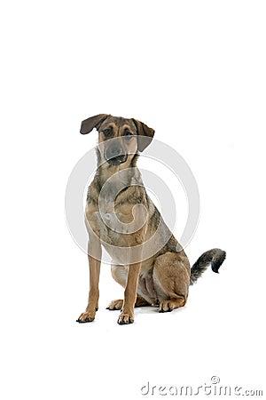 Free Big Dog Royalty Free Stock Photo - 6880695