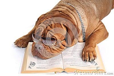 Big Dog Reading a Book