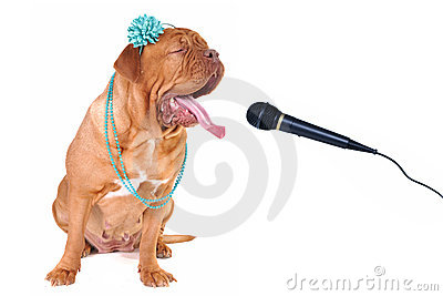 Big Dog Singing out Loud
