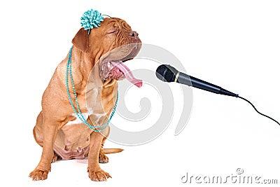Big Dog Singing out Loud