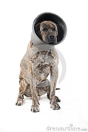 Free Big Dog Sitting Stock Images - 27540244