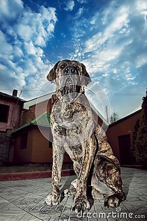 Free Big Dog Sitting Outdors Stock Photo - 38868940