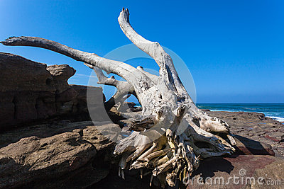 Big Dry Tree Rocks Storm Ocean