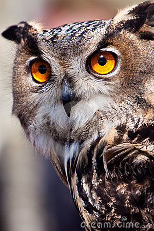 Free Big Eagle Owl In Closeup Stock Photography - 14691152