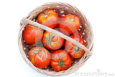 Big ecological tomatoes in a basket