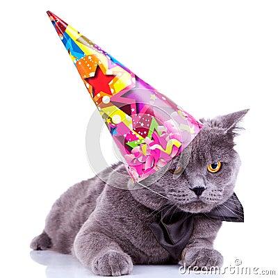 Free Big English Party Cat Royalty Free Stock Image - 22732456